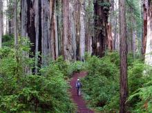 Black Friday is so pre-2015. This Nov. 27, go outside! Photo courtesy Save The Redwoods.