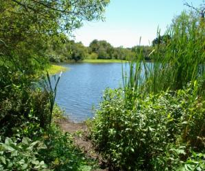 A path branches off from the main trail, opening up to a sweet view of Antonelli Pond on the Santa Cruz Westside.