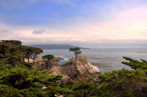 "The ""Lone Cypress"" at Pebble Beach, arguably the most famous tree in North America. Photo by Sam Baldwin (Flickr)."