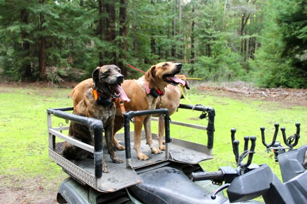 The dogs await the command. Brendan Bane photo.