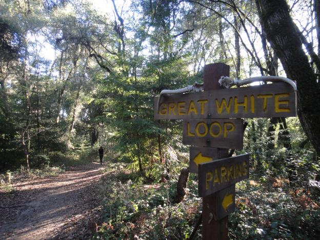 From this point on, the trail to the Great White Redwood is pretty steep. Photo by Garrett McAuliffe.