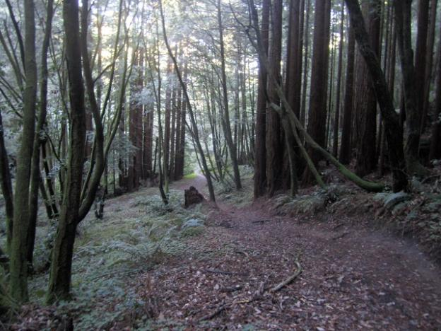 Enchanted Loop Trail at Wilder Ranch State Park