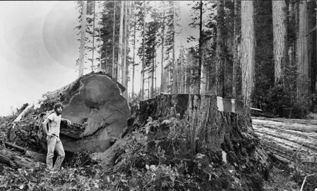 Greg King in the late 1980s in the Headwaters Forest. Photo courtesy Greg King.