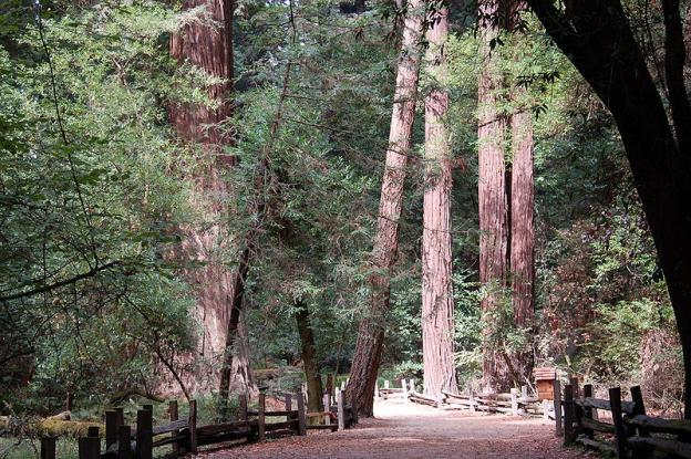 The Redwood Grove Loop makes for flat—and awe-inspiring—walking. Photo by Larry McElhiney/Creative Commons.