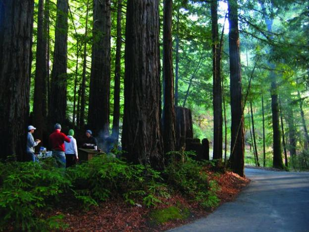 Little Basin, recently added to Big Basin Redwoods State Park with help from Sempervirens Fund, offers group camping in a majestic setting. Photo by Dan Quinn.