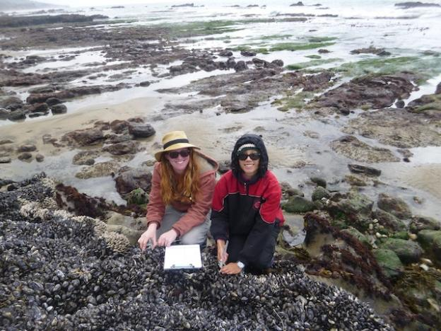 Monica and her research assistant Courtenay are seen here kneeling on a mussel bed. Photo courtesy Monica Moritsch