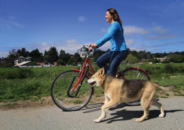 Notice that this dog is not pulling his mistress's arm out of its socket, thanks to the Moved by Bikes Dog Runner.