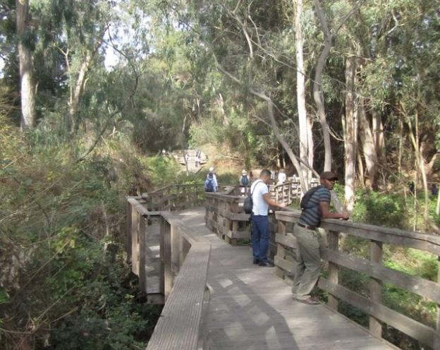Dare you to get on the boardwalk to the Monarch Grove and not groove on nature. Photo credit: Hilltromper.