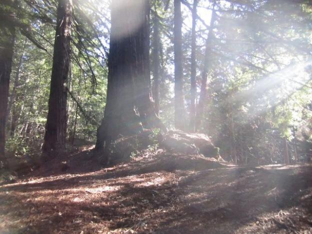 Middle Ridge Fire Road has it all—big redwoods, angel rays. Photo by Hilltromper.