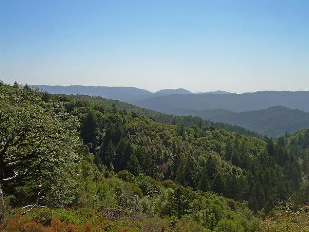 10. Today, we have a rare chance to reassemble the once-vast and vibrant local redwood forest between Silicon Valley and the Pacific Ocean. (More below.) Photo by David Sawyer / Creative Commons