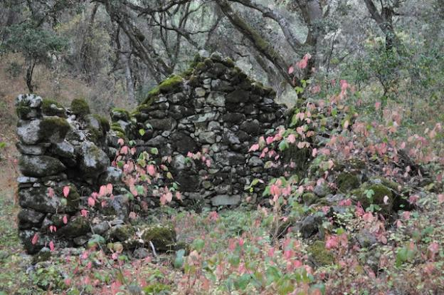 The stone walls of a homesteader's cabin stand amid rust-colored poison oak.