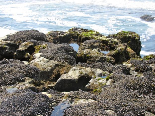 Tidepools at the edge of the intertidal zone are very active with marine life.