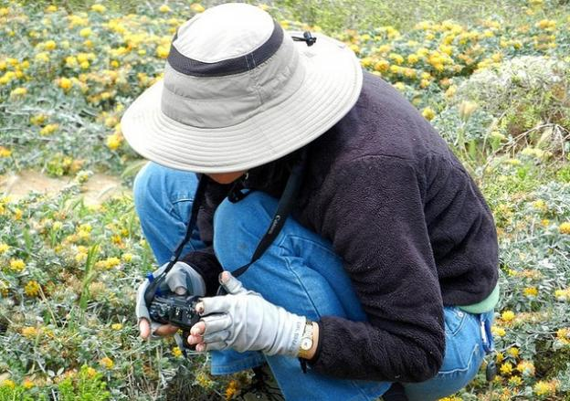 A botanist gets up close and personal with her quarry. Neal Kramer photo.