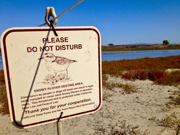Snowy plover nesting areas are off-limits. Photo by Maria Grusauskas.