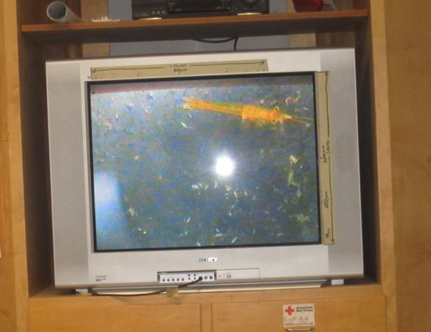 "In the classroom, the seawater sample is shown on a screen. That's a brine shrimp -- better known to some as a ""sea monkey."""