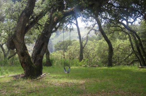 Just past Picnic Meadow, a perfect place for an after-lunch swing.