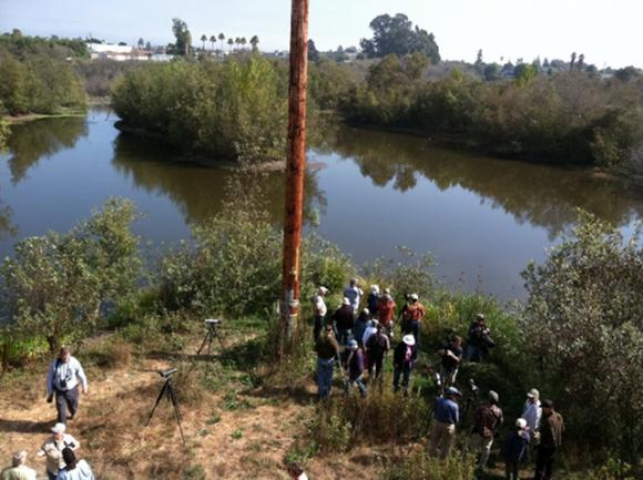 Birders line up to see a common cuckoo in a Watsonville slough in September 2012. Photo by Scott Smithson.