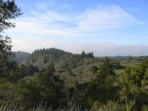 On April 21 the Santa Cruz County Supervisors consider a resolution in support of designating the Coast Dairies property a national monument. Photo courtesy Santa Cruz Redwoods National Monument Campaign.