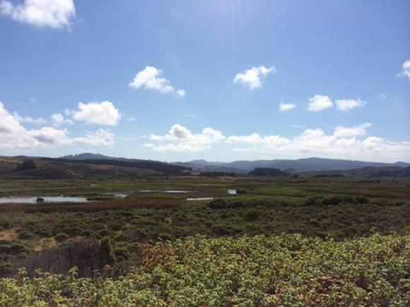 The wetlands that lie just inland from Pescadero State Beach are pretty easy on the eyes. Be careful, though—the stuff in the foreground is poison oak, and there's lots of it. Hilltromper photo.