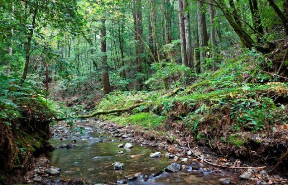 The San Vicente Creek watershed provides critical habitat for coho salmon, rainbow trout and a variety of birds, as well as providing essential drinking water for the town of Davenport. Photo by Karl Kroeber.