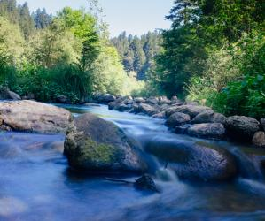 The mighty San Lorenzo River, home to several awesome swimming holes. Photo by Eric Ressler.
