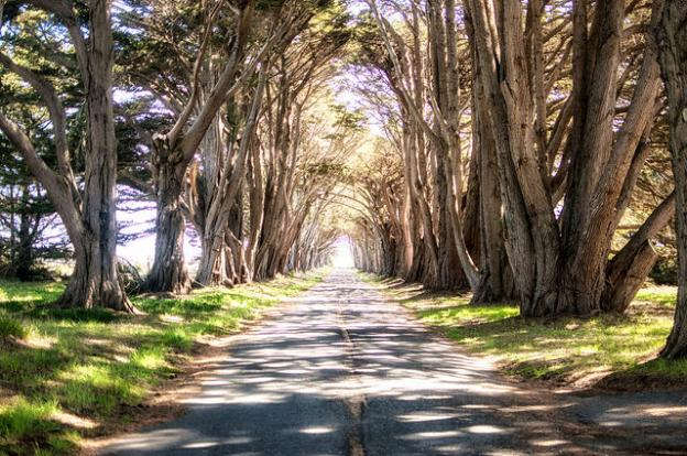 """The famous Monterey Cypress """"Tree Tunnel"""" at Point Reyes. Photo by Max Denisevich (Flickr)."""