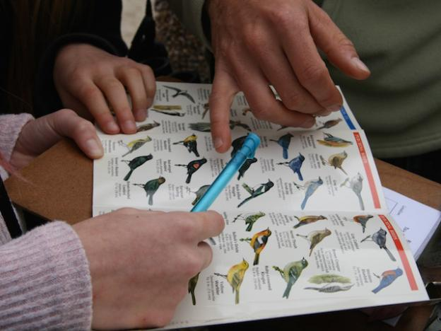 Identifying birds with the help of Feldstein and field guides.