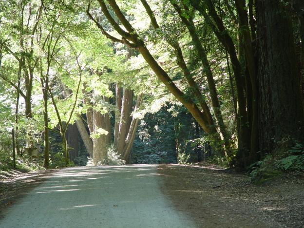Fire road at Nisene Marks State Park. Photo courtesy Friends of Santa Cruz State Parks.