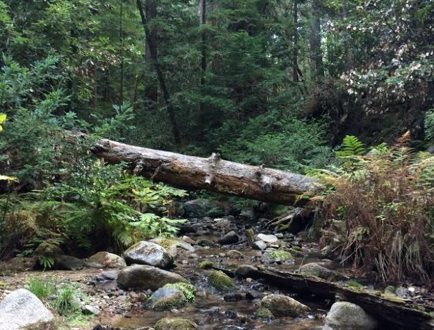 Fall Creek Trail, just north of the junction with South Fork Trail. Hilltromper photo.