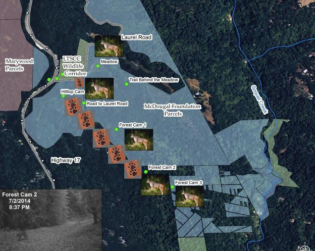 Lion activity near the proposed crossing on June 1-2 and July 2. Courtesy Pathways for Wildlife.