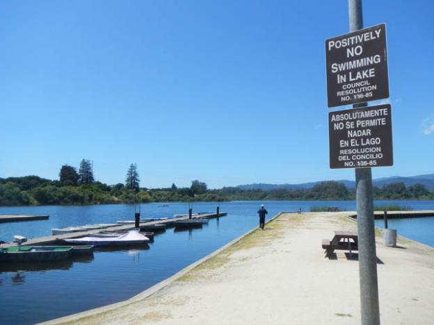 Thanks to potentially fatal toxic algae blooms, swimming in Pinto Lake is firmly discouraged.