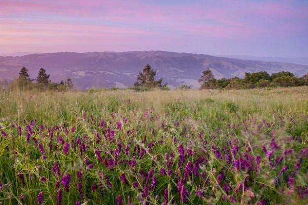 Star Creek Ranch is a 1,200-acre parcel in the middle of the picturesque Pajaro Hills east of Watsonville. It's been identified as a key source of clean water and wildlife habitat. Photo by Paul Zaretsky.