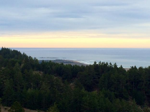 View of Point Ano Nuevo from Whitehouse Ridge Trail. Photo by Allison Titus.