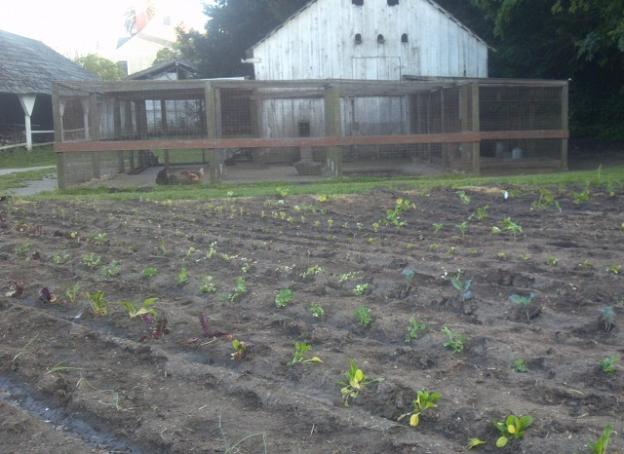 The garden at the Wilder Ranch farm complex was just planted last weekend.