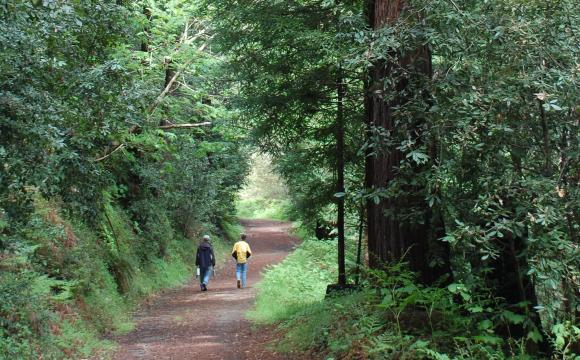 You won't see too many other people at Byrne-Milliron. Photo courtesy: Land Trust of Santa Cruz County.