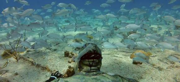 GoPro diver swims among his fishy friends.