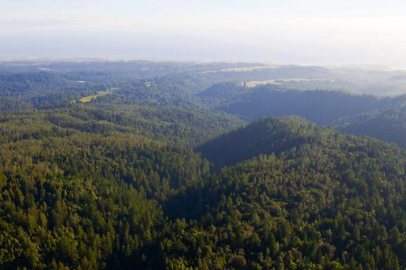 San Vicente Redwoods photo by William K. Matthias.