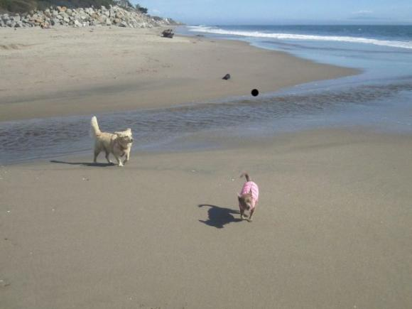 Rocko and Moose (not their actual names) at Corcoran Lagoon Beach, site of a proposed dog beach. Hilltromper photo.